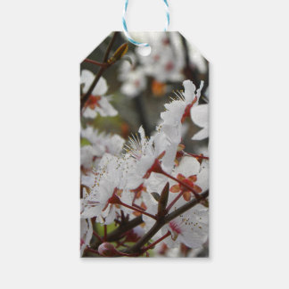 Spring in Canberra Gift Tags