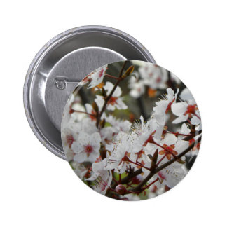 Spring in Canberra Pinback Button