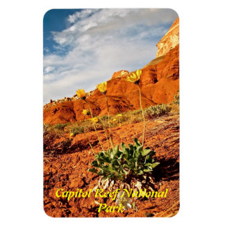 SPRING IN CAPITOL REEF NATIONAL PARK MAGNET