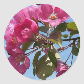 Spring In Maine Classic Round Sticker
