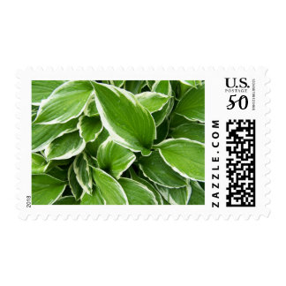 Spring In Maine Postage