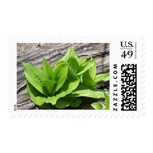 Spring In Maine Postage Stamp