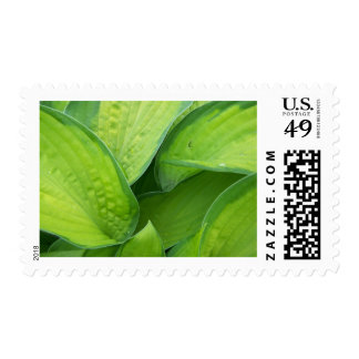 Spring In Maine Stamp