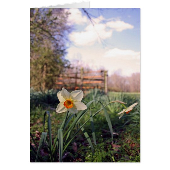 Spring in the Country Daffodil Note Greeting Card