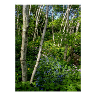 Spring in the woods poster