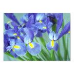 """""""Spring"""" Iris Flowers Photo Invitation"""