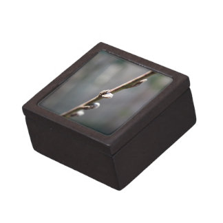 Spring is Coming Jewelry Box