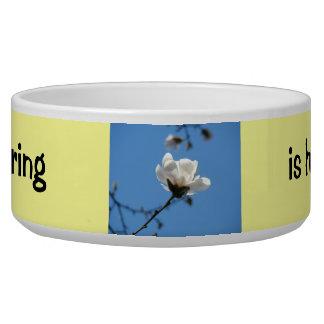 Spring is Here! Dog Bowl Magnolia Flower Blue Sky