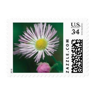 Spring is in the air postage