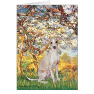 Spring - Italian Greyhound 5 Card