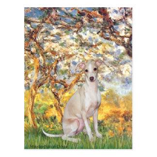 Spring - Italian Greyhound 5 Postcard