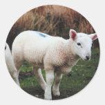 Spring Lamb Classic Round Sticker