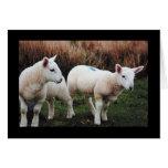Spring Lamb Greeting Card
