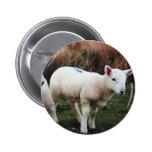 Spring Lamb Pins
