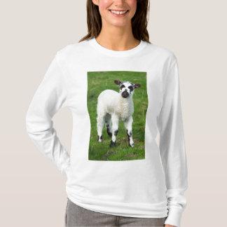 Spring Lamb T-Shirt