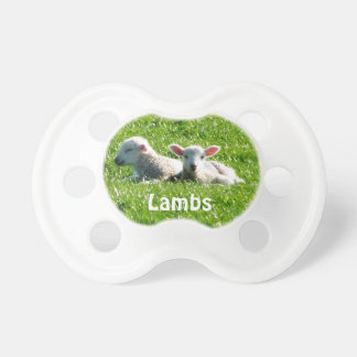 Spring Lambs in the Sunshine Cornwall England Pacifier