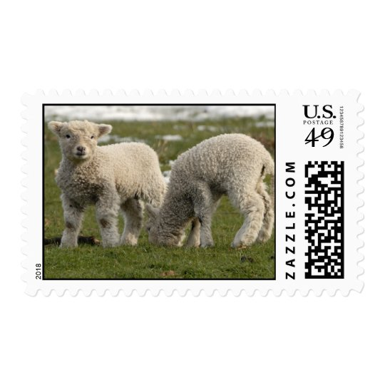 Spring Lambs Postage