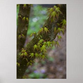 Spring leaves framed print