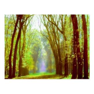 Spring Light Postcard