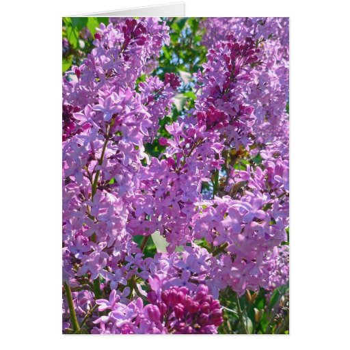 Spring Lilacs Greeting Card