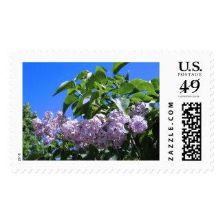 Spring Lilacs Postage