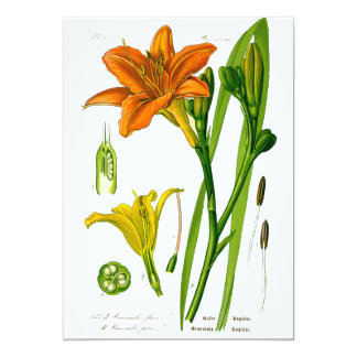 Spring Lily Card