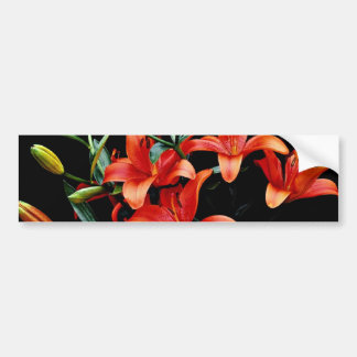 Spring lily firecracker flowers bumper stickers