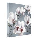 Spring Magnolia blossom, pink, soft grey Canvas Print