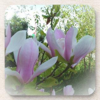 spring magnolia flowers coaster