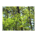 Spring Maple Leaves Green Nature Canvas Print