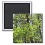 Spring Maple Leaves Green Nature Magnet