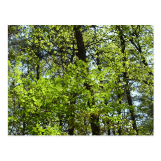 Spring Maple Leaves Green Nature Postcard