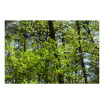 Spring Maple Leaves Green Nature Poster