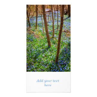 Spring meadow with blue flowers glory-of-the-snow photo card template