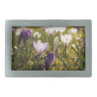 Spring meadow with crocus in the back light belt buckle