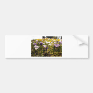 Spring meadow with crocus in the back light bumper sticker