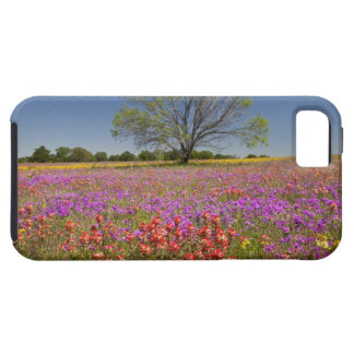 Spring mesquite trees growing in wildflowers, iPhone SE/5/5s case