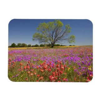 Spring mesquite trees growing in wildflowers, magnet