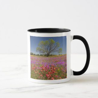 Spring mesquite trees growing in wildflowers, mug