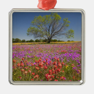 Spring mesquite trees growing in wildflowers, ornament