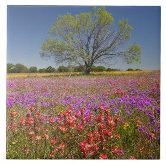 Spring mesquite trees growing in wildflowers, ceramic tiles