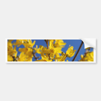 Spring messenger bumper sticker
