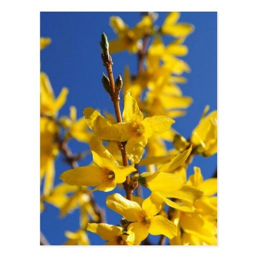 Spring messenger postcard