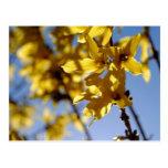 Spring messenger postcards