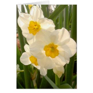 Spring Narcissi Cards