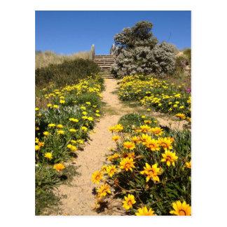 Spring ninety mile beach, Australia Postcard