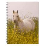Spring Notebooks