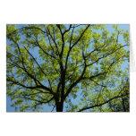 Spring Oak Tree Green Nature Scene Card