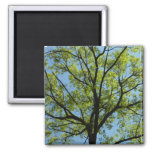 Spring Oak Tree Green Nature Scene Magnet