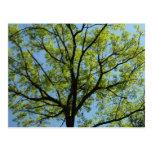 Spring Oak Tree Green Nature Scene Postcard